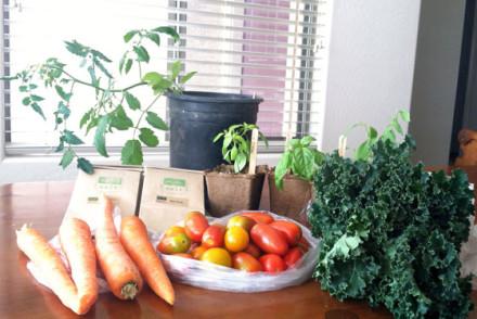 gilbert farmers market