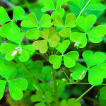 Gluten-Free Recipe Roundup for Your St. Patrick's Day