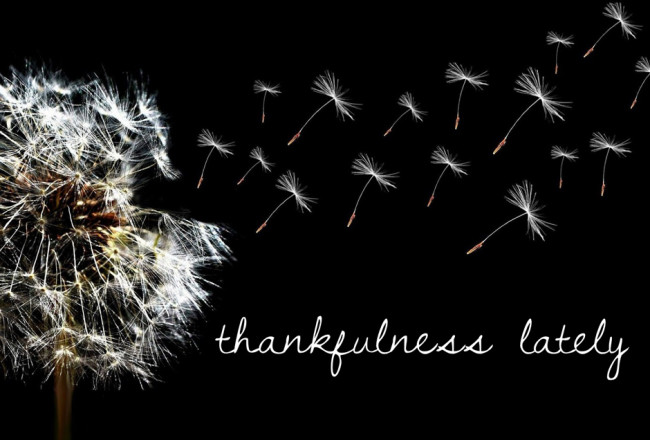 Thankfulness Lately | InspiredRD.com